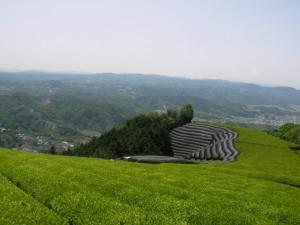 農業ソーシャルベンチャー、京都おぶぶ茶苑