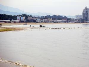 津屋崎浜の古伊万里陶片