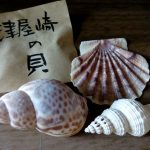 文様の話、津屋崎の貝。
