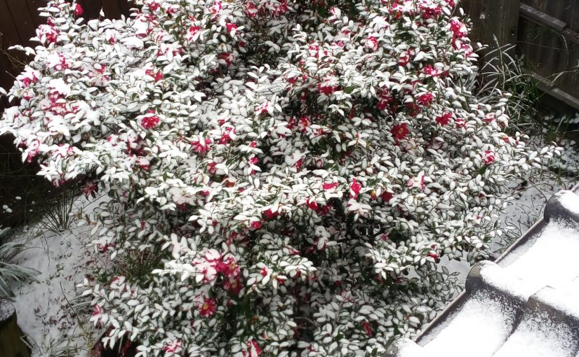 津屋崎に雪は積もらない!?