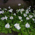 5月初めの花祭窯の庭。