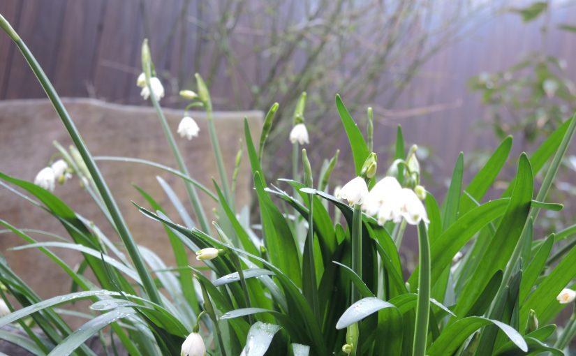 最近の、花祭窯の庭。