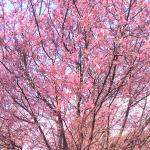 弥生三月、変転の季節。