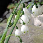 花祭窯の庭にも春。
