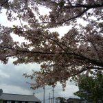 四月八日は花まつり。