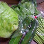 お野菜定期便。