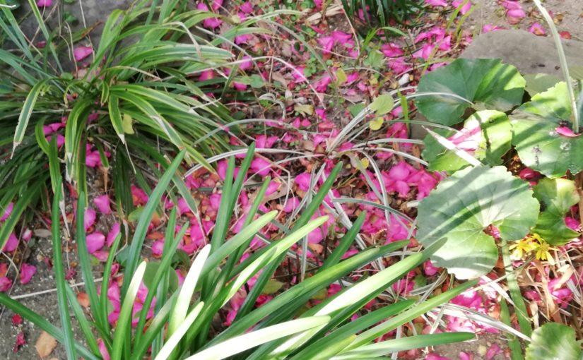花祭窯の師走の庭。