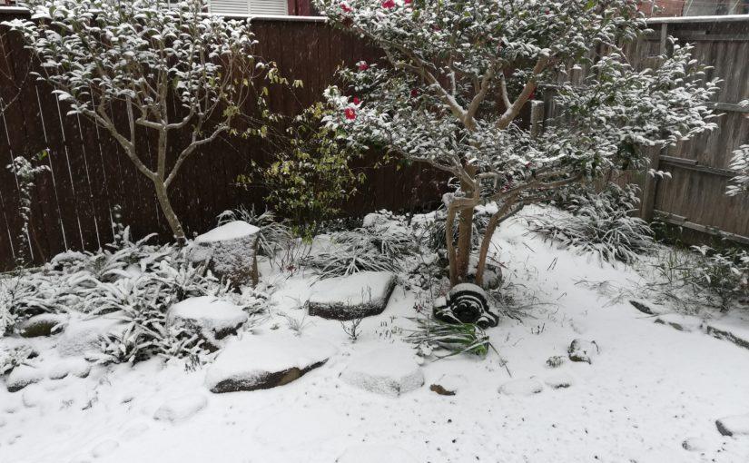 珍しく雪景色の津屋崎です。