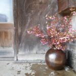 寒緋桜(かんひざくら)が届いたら、一気に春っぽくなりました。