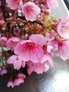 花祭窯の二月の庭
