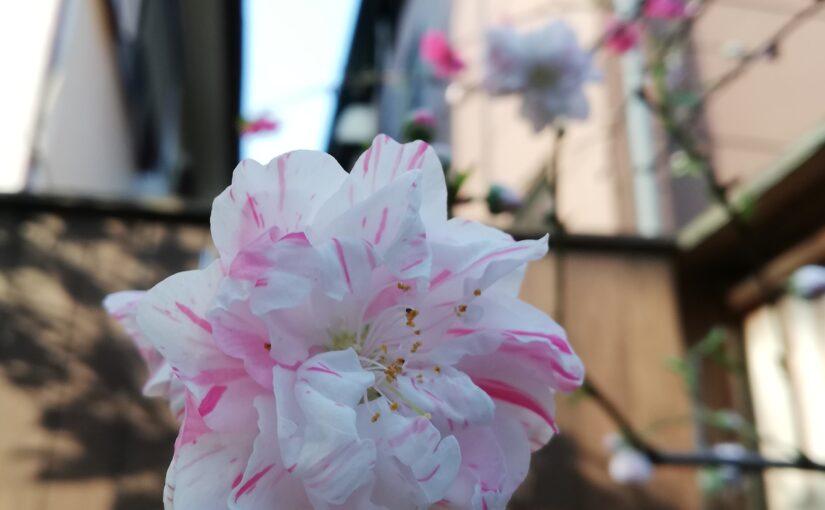 花祭窯の三月の庭。