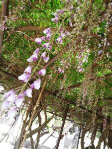 ご近所花見。