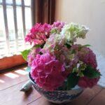 紫陽花シーズン到来です。