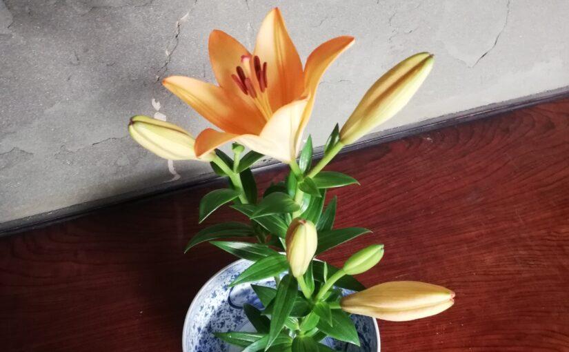 花を生けるたびに、いつも思うこと。